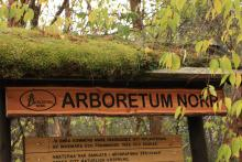 Arboretum Norr,  malowniczo położone nad rzeką Ume[.