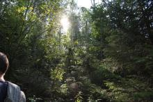 W lesie chłodniej, trafił nam się super słoneczny dzień!