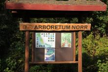 Jesienne Arboretum Norr.
