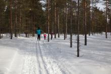 Olles spår, super ścieżka na biegówki przygotowywana przez lokalny klub sportowy.
