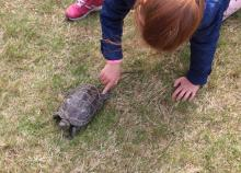 Inną atrakcją były dwa żółwie.